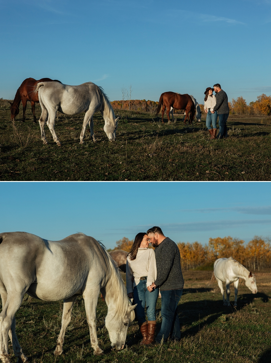 prince albert engagement photos with horses